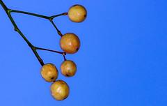 ........... (robertoburchi1949) Tags: minimal macro closeup flora piante plants