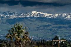 Palm Trees & Snow in San Jose (Jeffrey Balfus (thx for 3.3 Million views)) Tags: sonyalpha sonya9mirrorless sonyilce9 fullframe emountsony100400mmg sal100400f35g la rincoanda sanjose winter mountains thegalaxy