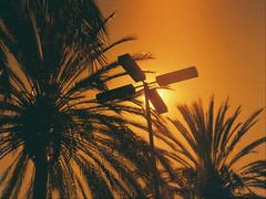 Saratoga Morning (ccluff) Tags: saratoga palmtrees bayarea southbay redscale lomography lightleak