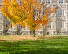 Campus Fall (stochastic-light) Tags: landscape newtopographic flat campus virginiatech pamplinhall fall mapletree autumn fallfoliage compositions