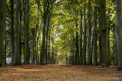 woods terapel lane (Marcel Boelen) Tags: lane bos bomen najaar terapel boslaan