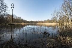 Tenellaplas (m.ritmeester) Tags: ngc naturelovers natuur nederland zuidholland wit water blauw bruin bomen tenellaplas rockanje bos