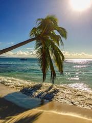 Samana -- Dom. Rep. -- Handybilder (Günter Hentschel) Tags: samana domrep dominikanischerepublik karibik karibikinsel aida aidadiva aidadivamomente handy handyfoto handybilder hentschel flickr apple iphone sonne strand cayolevantado