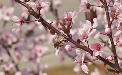 Si naciese una flor cada vez que pienso en tí, tendría un jardín florido hasta la eternidad, y más. (elena m.d.) Tags: macromondays 7dwf new sigma sigma105 nikon d5600 nature flower guadalajara