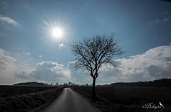Route de campagne (Dicksy93) Tags: dsc03237 route campagne arbre tree soleil sun ciel sky nuage cloud paysage landscape landschaft paisage paesaggio landschap champ extérieur outdoor argoat le saintesprit des bois plédéliac côtes darmor 22 breizh bretagne brittany bzh france europe dicksy93 catherine olivier sony dscrx10m4 24600mm f2440
