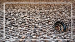 3 Snailhousecarpet (andantheandanthe) Tags: creative creativity closeup close up macro trix photoshop adobe kreativ kreativitet närbild makro kreativer herauf makrotix créativité créative gros plan fine creativa del primo piano di creatività sulla creatividad primer plano snow snö carpet snail snailhouse