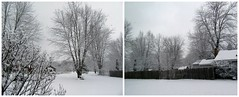 Winter Morning Snowscape (genesee_metcalfs) Tags: collage winter march snow ice trees homestead