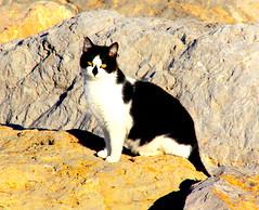 The Gat- El Gato.- (angelalonso4) Tags: canon eos 7d mark ii tamron 16300mm f3563 di vc pzd b016 ƒ160 3000 mm 1100 100 gato gat felino blanco negro piedra mirada ojos fotografía cámara ritratto foto capture rostro shot