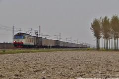 E652 004 (Mattia Deambrogio - Trains & Cars Photos) Tags: e652 004 prototipo borgolavezzaro nikoncoolpixl820 nikon coolpix l820 novara boschetto frosinone ewals cargo