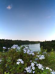 Pierce reservoir, Singapore (Tom Helleboe) Tags: