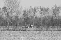 mesi che non piove (giovannazorzenon) Tags: allaperto alberi campagna monocromo bianconero paesaggio primavera