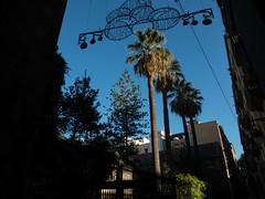 Palmeras de Barcelona (efe Marimon) Tags: canonpowershots120 felixmarimon barcelona palmeras