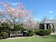 DSCN5739 (littlereview) Tags: dc littlereview 2019 nationalcathedral church flower garden spring blog