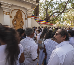 2 Sri Lanka, Anuradhapura, WHS 053 (John AT) Tags: review sri lanka selection birds buddhas