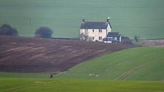 Farm Labourer's Cottage and Roe Deer (stevedewey2000) Tags: salisburyplain wiltshire landscape farmhouse cottage farmworkershouse deer roedeer corvids tamron150600
