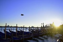 Safe and sound (Lívia.Monteiro) Tags: venice veneza azul blue piazza san marco praça são marcos flying bird boat traveling travel viage europa europe holiday férias barcos mar