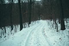 KRIS7453 (Chris.Heart) Tags: túra tél természet winter hiking forest pilis