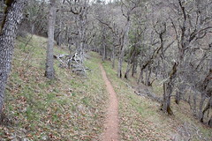 Trail, ambling through a glade of oak (rozoneill) Tags: sterling mine ditch trail ruch jacksonville oregon hiking blm little applegate river