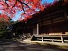 西芳寺(苔寺)觀音堂 Moss garden of Saihoji (Eiki Wang) Tags: 西芳寺 西芳寺さいほうじ 苔寺 苔寺こけでら saihoji kyoto 京都 kokedera momiji 楓 紅葉 世界遺產