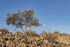 _RJS4703 (rjsnyc2) Tags: 2019 africa d850 desert dunes landscape namibia nikon outdoors photography remoteyear richardsilver richardsilverphoto safari sand sanddune travel travelphotographer animal camping nature tent trees wildlife