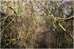 im korkus 286 (beauty of all things) Tags: eschweiler wald forest imkorkus gestrypp gestrüpp scrub wirrwarr tangle entropy dschungel jungle