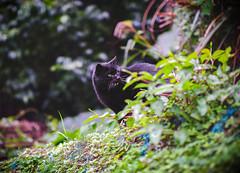 猴硐貓村 (旅人74) Tags: fujifilm xt100 56mmf12 富士 trip travel 旅行 ねこ 猫 貓 outdoor ネコ 写真 攝影 photography 桃園 猴硐 台灣 taiwan taoyuan pet 貓村 野良猫 catvillage animal cat kitten