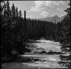Downstream (greenschist) Tags: trees vaskar80mmf45 analog ilfordpanfplus50 stream mediumformat 6x6 mountains voigtlanderperkeoi canada yohonationalpark britishcolumbia film clouds