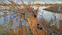 Bildschichten Am Fluss 32 Wieltsee (wos---art) Tags: bildschichten fluss river wasser water unterwasser underwater gestrüpp bäume baum verbrand ausgehöhlt rus äste ufer
