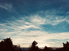 59/365/8 (f l a m i n g o) Tags: arvada morning february 21st 2019 thursday project365 365 days 36345