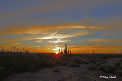 Watching the sun sink slowly in the desert (littlebiddle) Tags: allofarizonaphotography arizona tontonationalforest