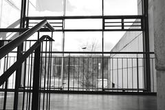Lines over lines (frankdorgathen) Tags: xf10 fujifilm ruhrpott ruhrgebiet bochum monochrome blackandwhite schwarzweiss schwarzweis fassade facade gebäude building geländer railing fenster window treppenhaus staircase
