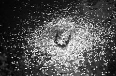 February 19, 2019_kyoto_14 (Satoshi Kondo) Tags: bw bnw blackandwhite blackandwhitephotography blackandwhitephoto bnwphoto bwphoto bnwphotography bwphotography blackandwhitepoto blackandwhitepotography monochrome filmphotography filmcamera filmphoto film filmpoto leica leicaphoto leicaworld leicam3 street streetphoto streetsnap streetphotography summicron summicron50mm kyoto japan 京都 白黒 フィルム フィルム写真 フィルムカメラ ライカ ライカm3 ズミクロン kodak