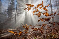 Blumenstein Nebel Bike Tour (Bugtris) Tags: 2470f4l nebel landschaft forest hdrdri laub fog canon 5dmkiii trees wald
