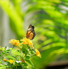 2019-02-11_12-52-00_ILCE-6500_DSC02854_DxO (Miguel Discart (Photos Vrac)) Tags: 2019 202mm animal animalphotography animals animalsupclose animaux butterfly chiangmai createdbydxo dxo e18135mmf3556oss editedphoto fleurs flowers focallength202mm focallengthin35mmformat202mm holiday ilce6500 iso200 nature naturephotography papillon pet sony sonyilce6500 sonyilce6500e18135mmf3556oss thailand thailande travel vacances voyage