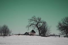 (emmakatka) Tags: abandoned derelict decay sky emmakatka minnesota winter spring snow midwest cold tree broken alone farmstead