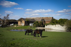 Howbury Moat, Slade Green (London Less Travelled) Tags: uk unitedkingdom britain england london city urban suburb suburban suburbia bexley moat howburymoat tithe barn water horse