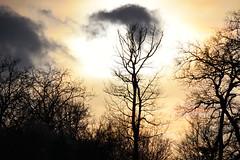 Au soir (Croc'odile67) Tags: nikon d3300 sigma contemporary 18200dcoshsmc ciel cloud sky nature nuage arbres trees coucherdesoleil sunset