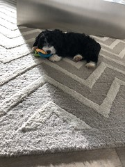 Ella Fitz playing with her toys