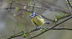 J78A0214 (M0JRA) Tags: robins birds humber ponds lakes people trees fields walks farms traylers