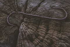 S (PaulHoo) Tags: vintage detail closeup fujifilm x70 topaz labs editing background 2018 polder s wood iron old decay structure pattern