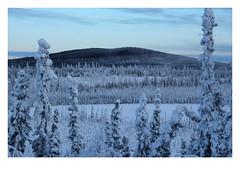 Boreal Landscape (Robert Drozda) Tags: uppertanana alaskahighway alaska landscape hoarfrost borealforest lake hill ice snow spruce fbxtopdx2018 canon60d dawn drozda