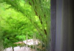 Cozy morning.. (Rekha Prasad) Tags: cozymorning krabi thailand vacations holidays nikon d3300 nikor 35mm