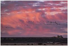 Amaneciendo  en Gallocanta (explore  29-1-19) (Juan J. Marqués) Tags: gallocanta grullas amaneceres rojos ermita