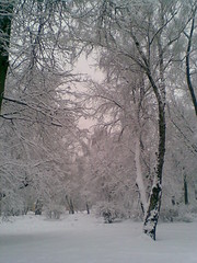 Today in Moscow. (VERUSHKA4) Tags: trunk composition vue view europe russia moscow city cityscape ville outdoor neige snow neve white nature blanc hiver winter wintertime season february snowfall bush branch perspective bough nokia telephoneshot