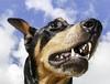 The Zigmeister CG (Wingsagainstthewind) Tags: headshot dog frombelow doberman loyal fearless teeth blackandtan lookup friend