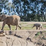 Mkhaya - San Diego Zoo Safari Park thumbnail
