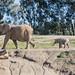 Mkhaya - San Diego Zoo Safari Park