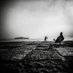 3350 (Elke Kulhawy) Tags: venice blackandwhite bw bnw monochrome fog nebel water taube bird boat boot schwarzweiss vebedig grain absoluteblackandwhite