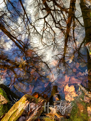 Pond Life! (Kathy@dornickdesigns) Tags: iliveintheforest kathyhardyphotography lifeintheforest myhandmadelife pondlife reflection winter2019 topazsoftware