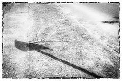 Les Errements de l'âme / The wanderings of the soul #2 (Napafloma-Photographe) Tags: 2018 bandw bw france géographie hautsdefrance letouquet métiersetpersonnages pasdecalais personnes techniquephoto blackandwhite monochrome napaflomaphotographe noiretblanc noiretblancfrance photographe province fr